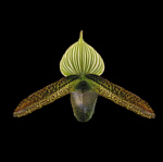 Paph.Recovery